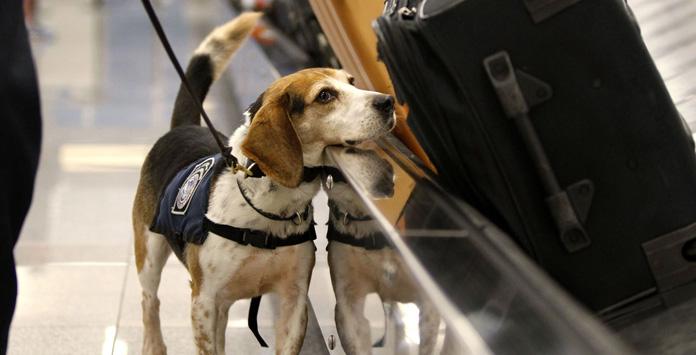 Kontrola na lotnisku w USA