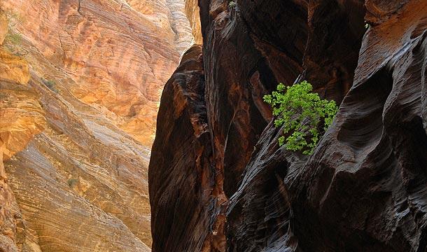 park-narodowy-zion-narrows-przewodnik-po-usa3