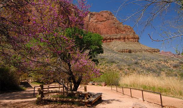 kanion-kolorado-indian-garden
