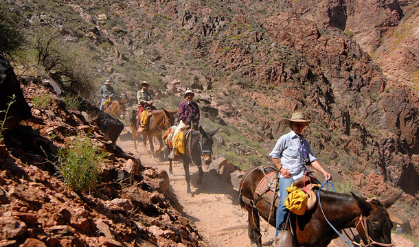kanion-kolorado-muly-wycieczka