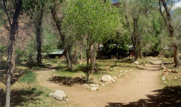 kanion-kolorado-phantom-ranch-drzewa