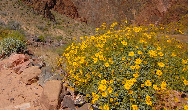 kanion-kolorado-szlak-kwiaty