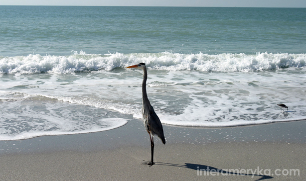 Ptaki na Florydzie