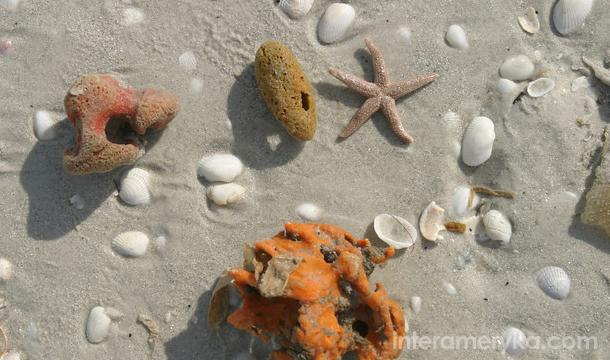 Ocean - muszle na Florydzie