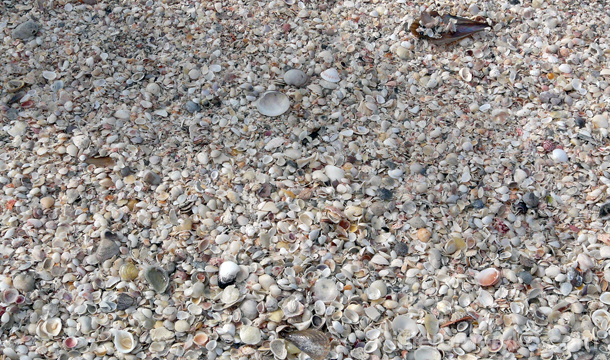 muszle na plażach Florydy