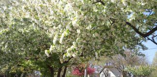 Wiosna w YSA