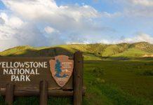 Park Yellowstone w USA