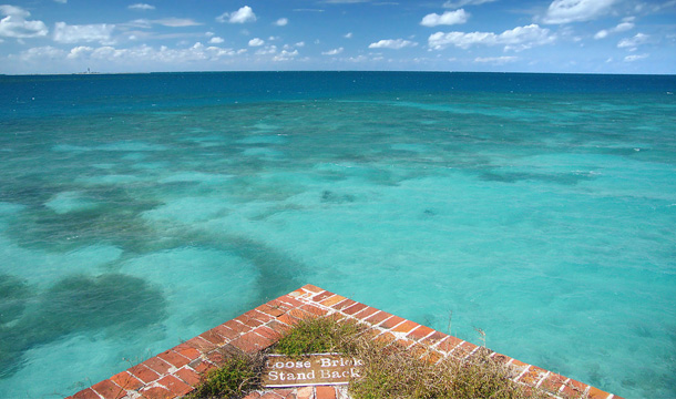 Dry Tortugas woda i rybki na Florydzie