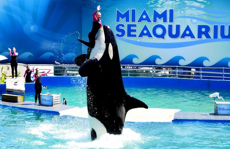 Akwarium Miami Floryda