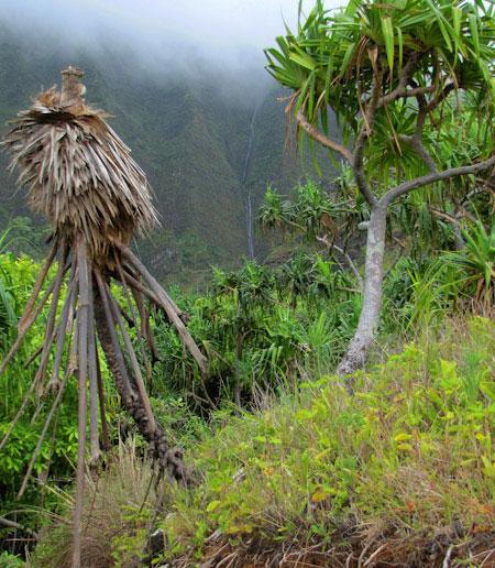 Hawaje-klify-wodospad
