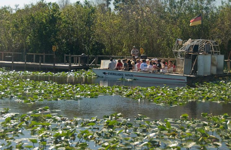 bagna-everglades i Aligatory